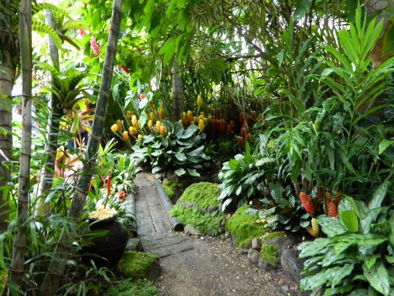 More tropical inspiration a bellingen diary for Unusual trees for small gardens