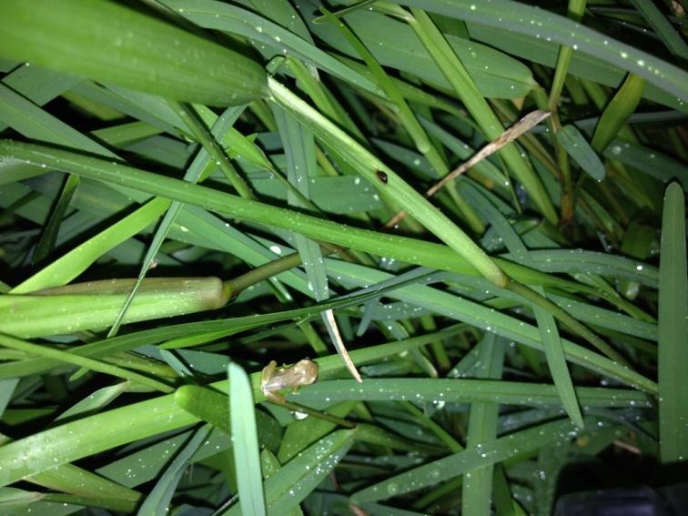 Baby Frog(1024x768)
