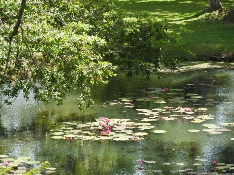 Lily ponds at the base of the climb