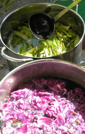 Red cabbage and Lemon myrtle