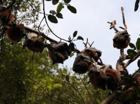 Branch full of bats