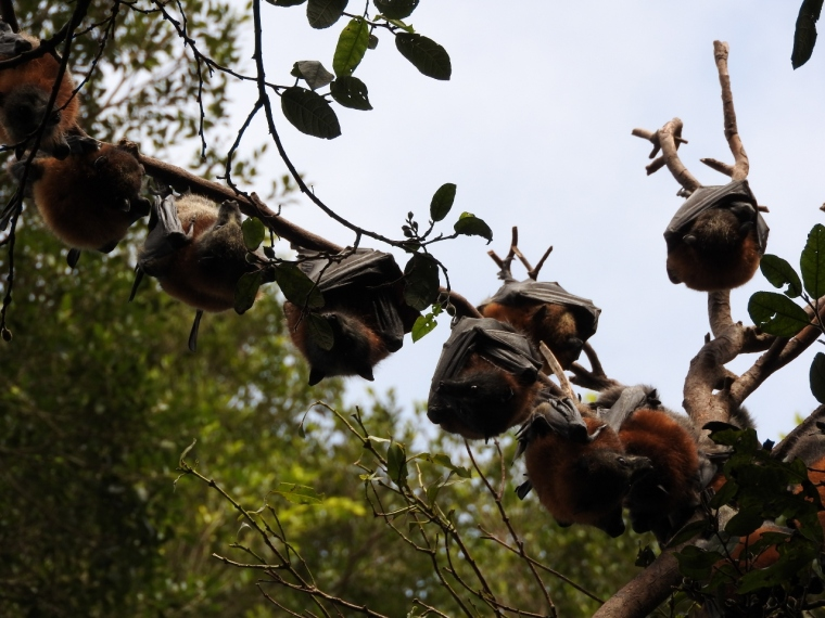 Branch full of bats