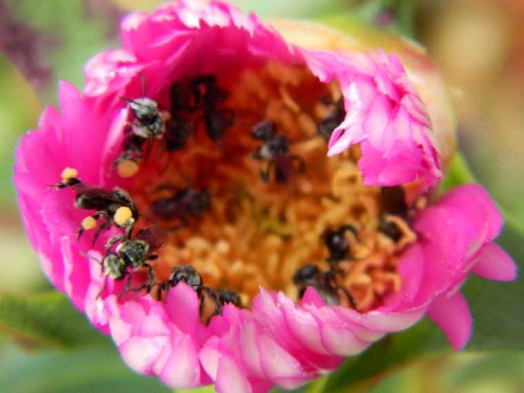 Thirteen bees - a World Record?
