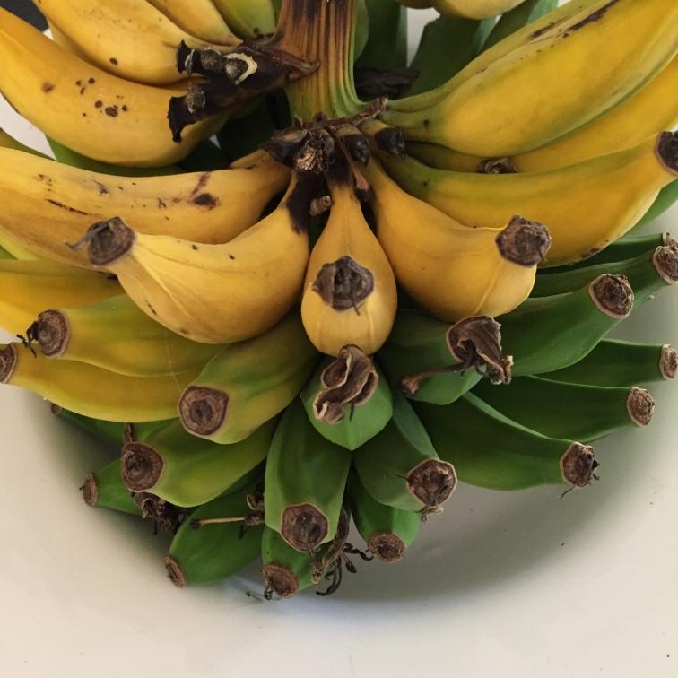 slowly-ripening