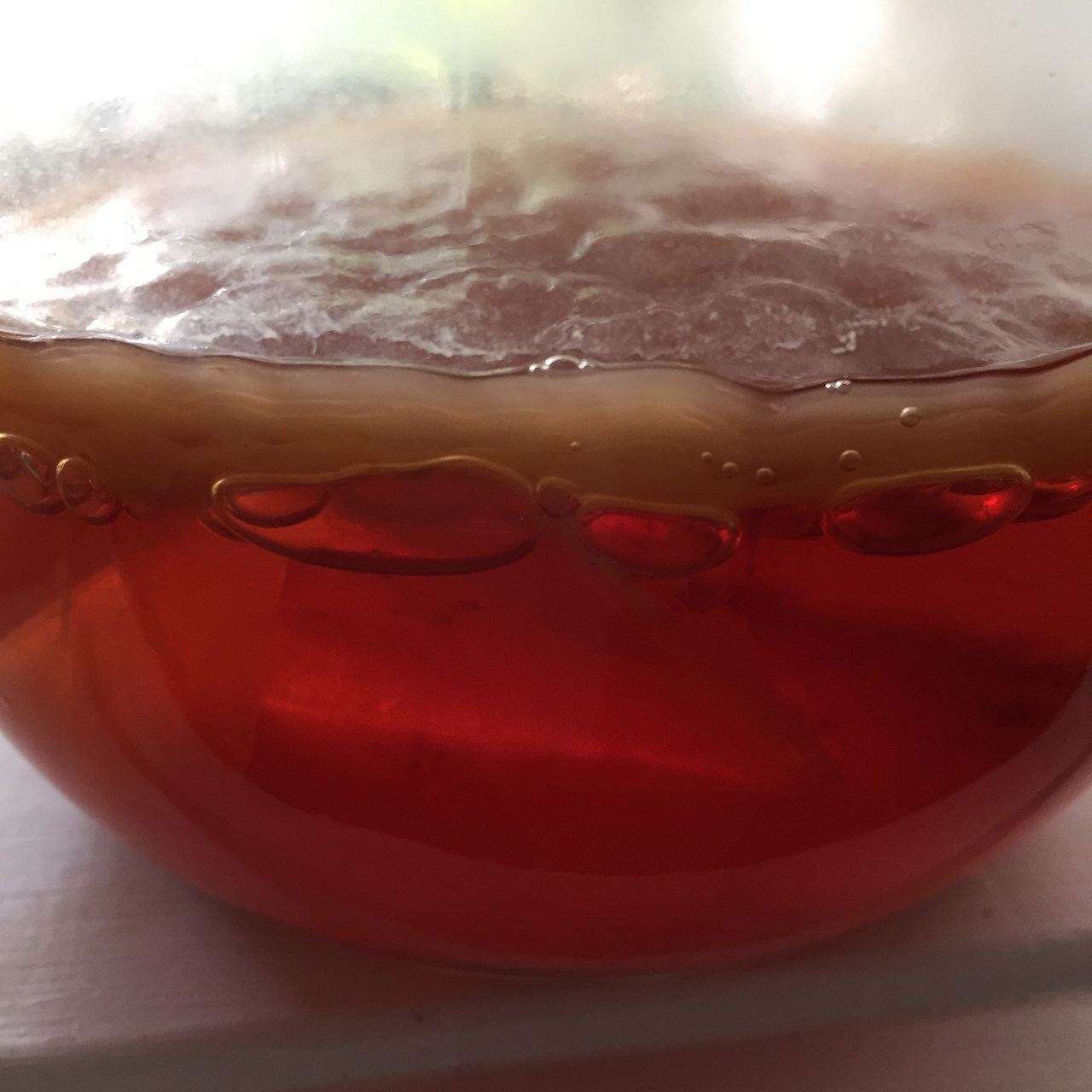 My pet scoby …