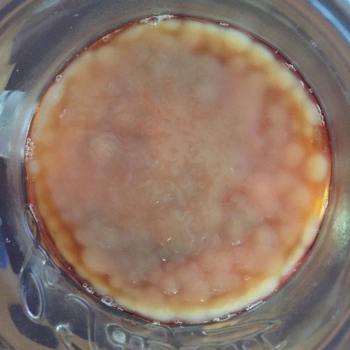 My first scoby